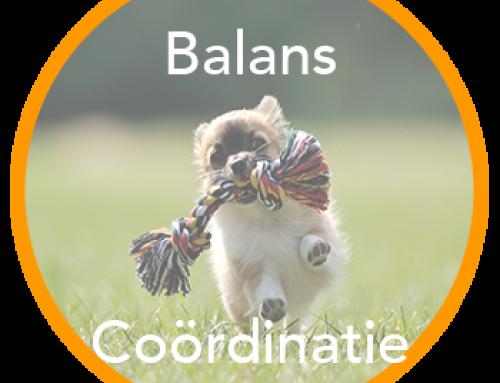 Balans & Coördinatie
