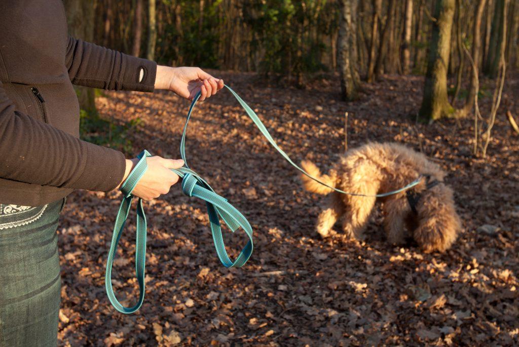 Puppycursus Coachjehond